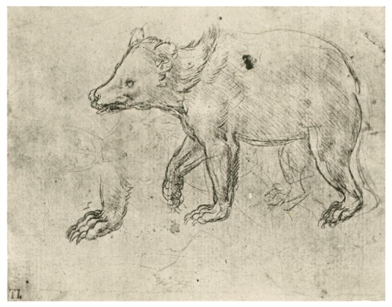 Изображение медведя