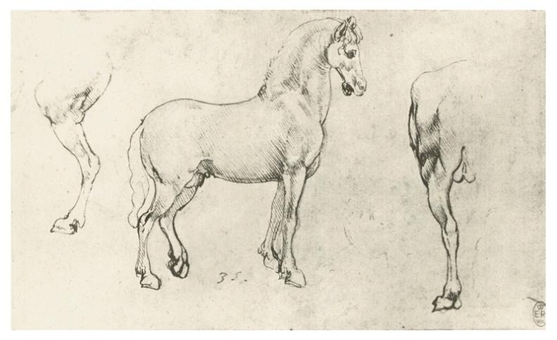 Изучение анатомии лошади