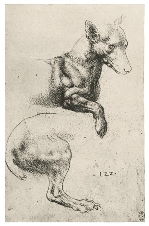 Изображение мышц собаки