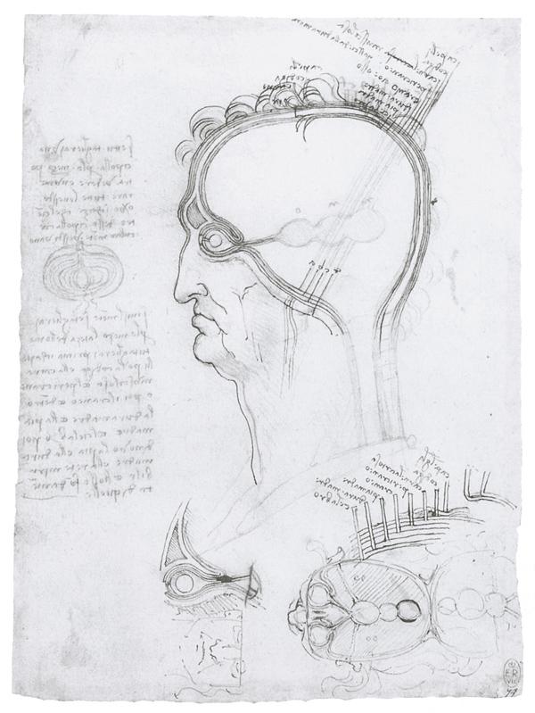 Разрез головы человека