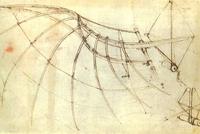Рисунок крыла
