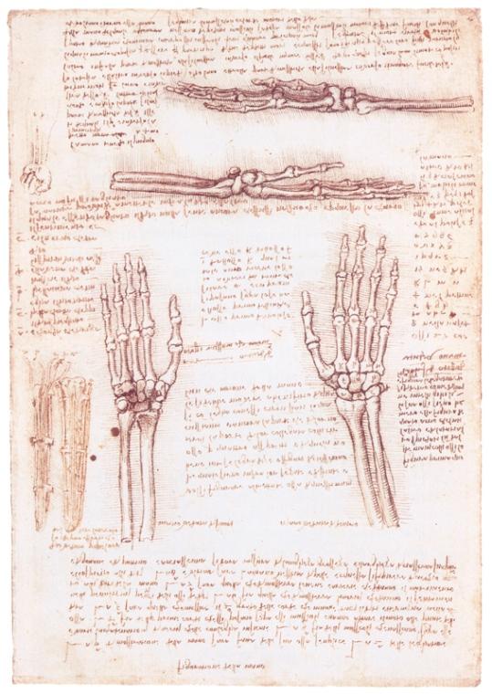 Изучение строения кистей рук человека