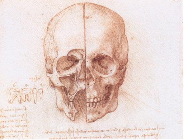 Изучение строения черепа