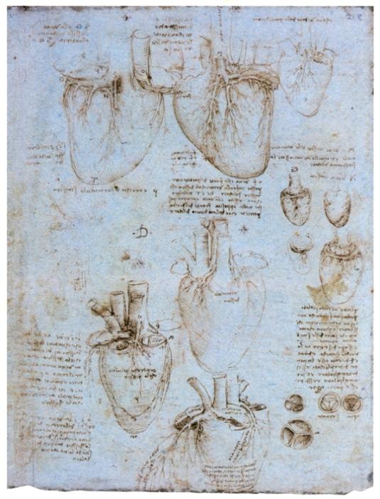 Изучение анатомии сердца