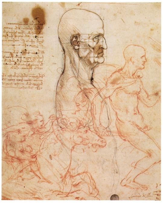 Изучение пропорций лица человека и сравнение мускулатуры человека и лошади