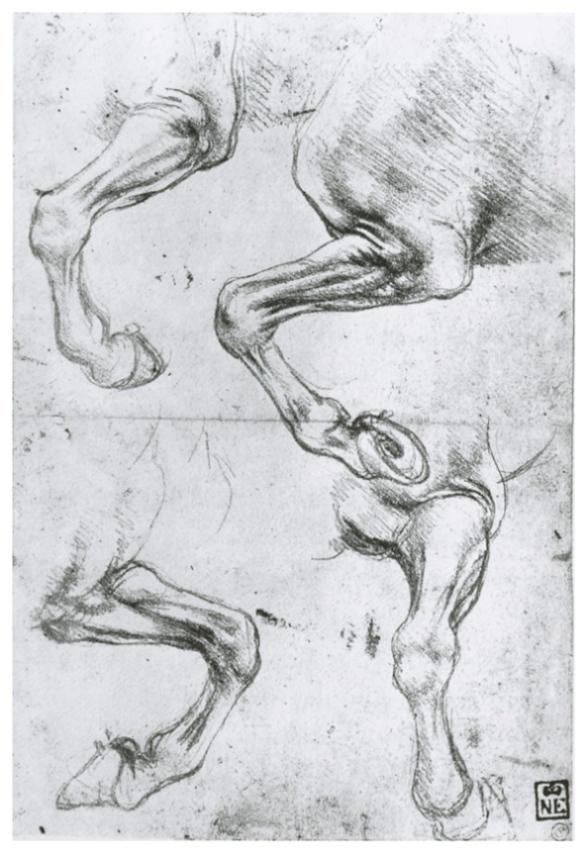 Изучение анатомии лошадиных ног