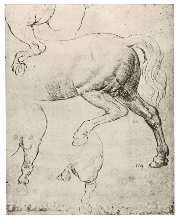 Детальная прорисовка лошади
