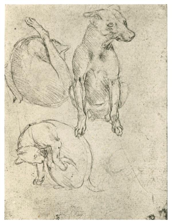 Изображение собаки