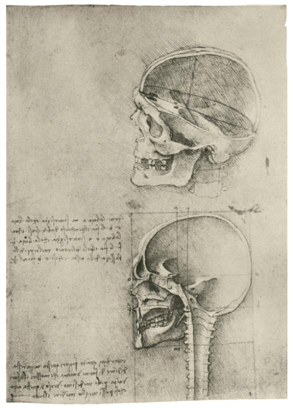 Изучение черепа
