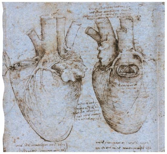 Рисунок сердца и кровяных сосудов