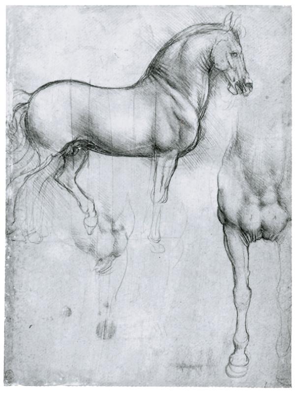 Лошадь спереди и в профиль