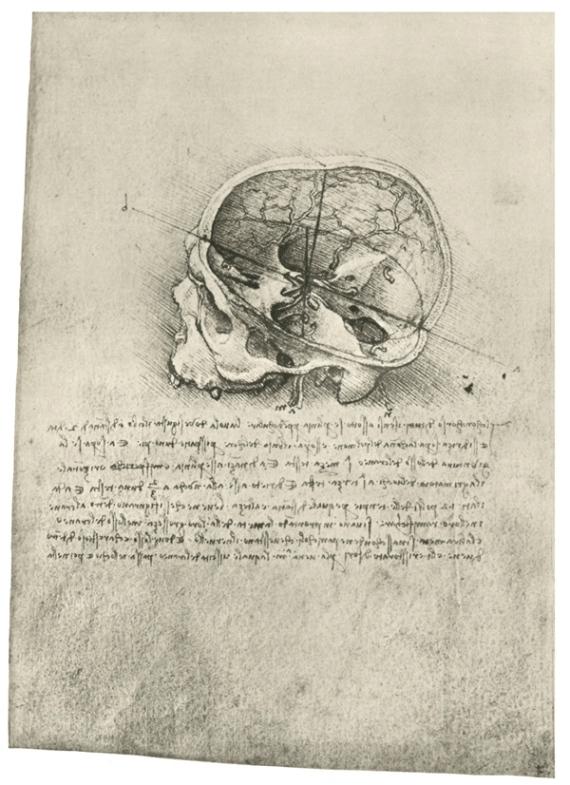 Анатомический рисунок черепа в разрезе