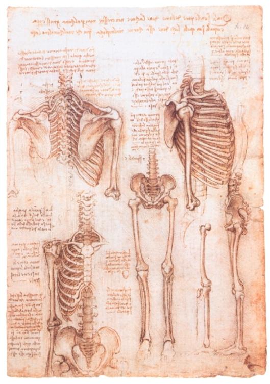 Изучение строения скелета человека