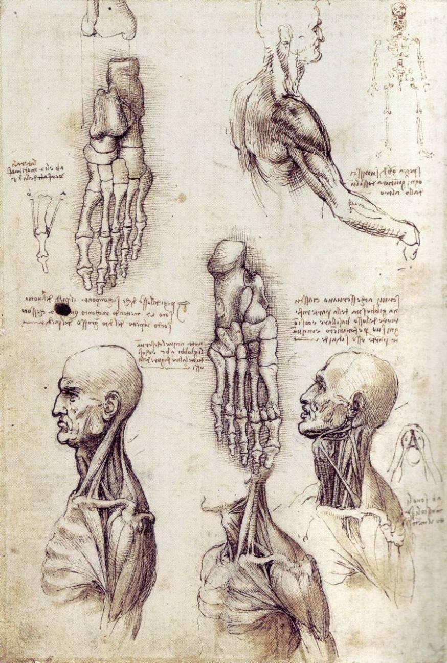 Изучение строения стопы человека и торса
