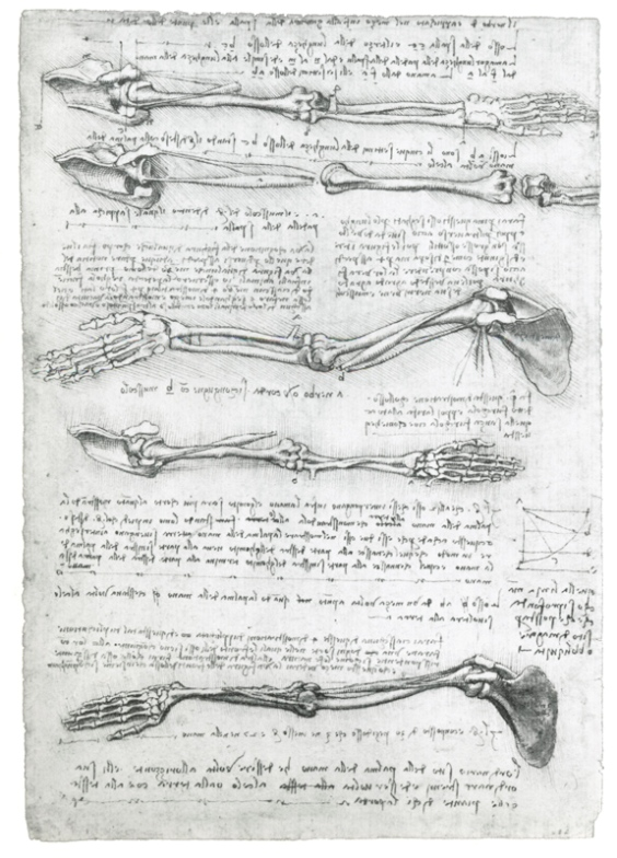 Анатомические зарисовки костного строения руки человека
