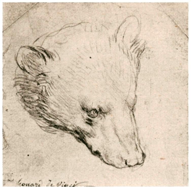 Зарисовка головы медведя
