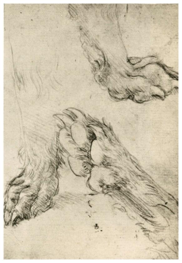 Зарисовка собачьих лап
