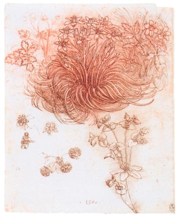 Изображение цветка