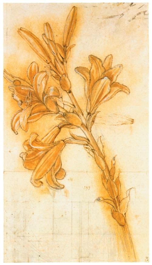 Цветок лилии